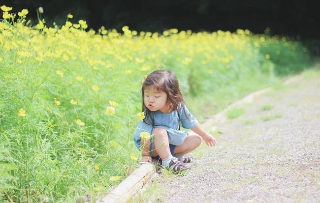 Ngẩn ngơ ngắm cánh đồng hoa cosmo Nhật Bản khoe sắc rực rỡ như ở chốn thiên đường